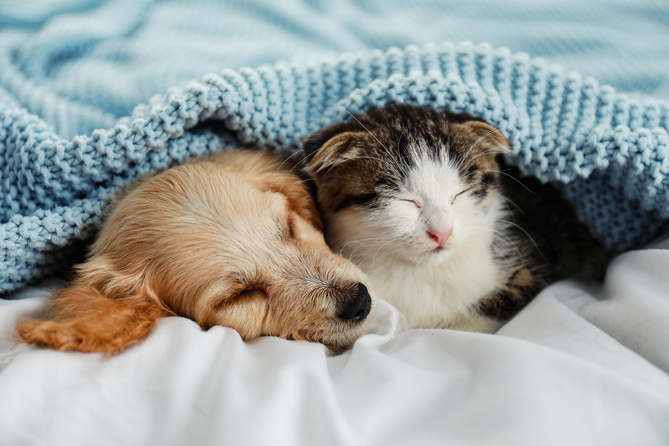 We're pet friendly! Cats and dogs (no weight restrictions) are welcome.