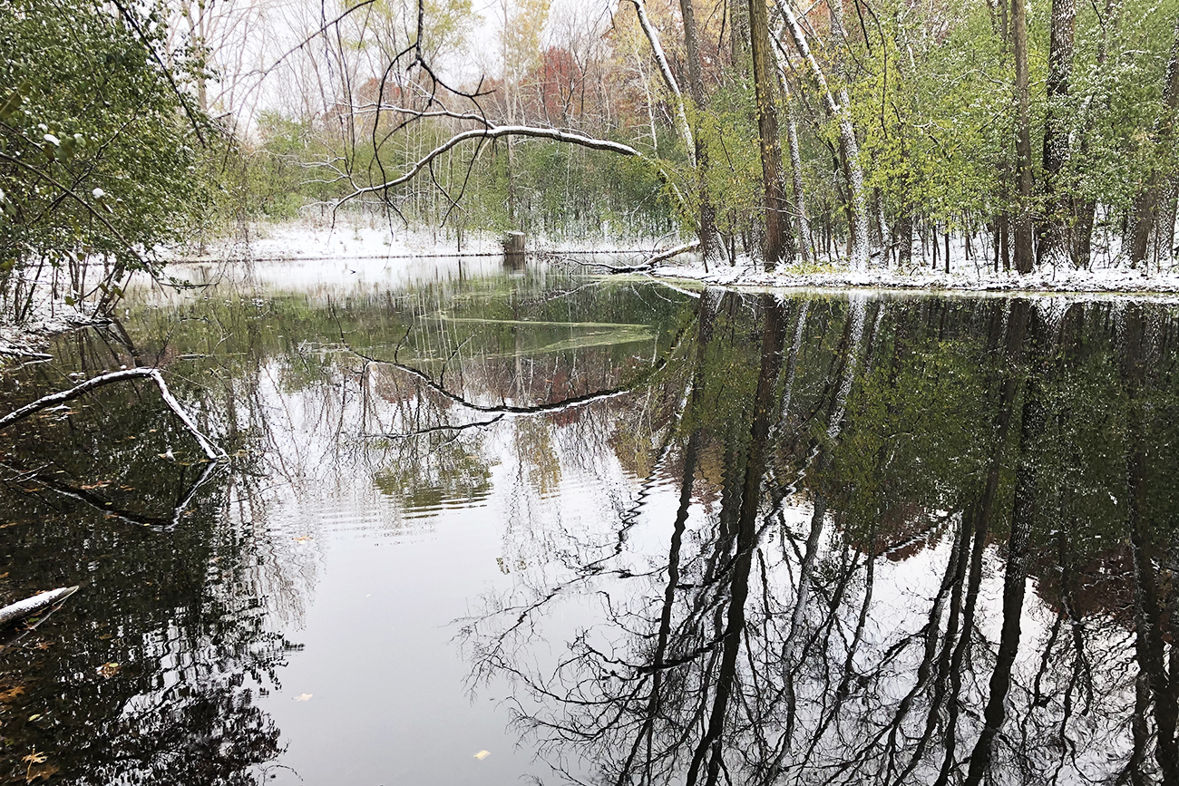 Property wetlands make for scenic walks in any season